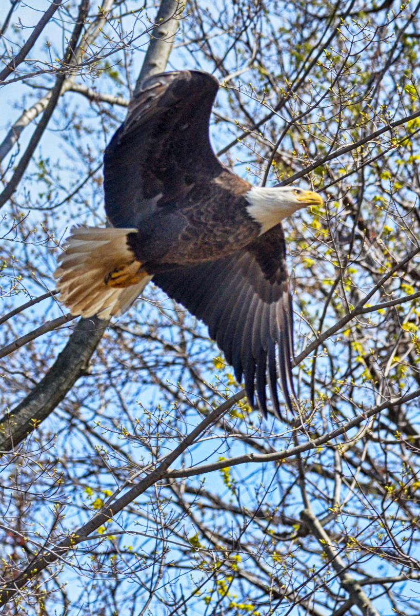 Eagle Update - The Observation Deck